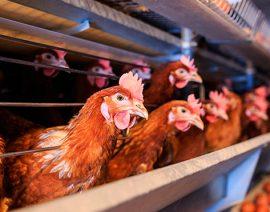 ¿Qué son y para qué sirven los correctores para la nutrición animal?